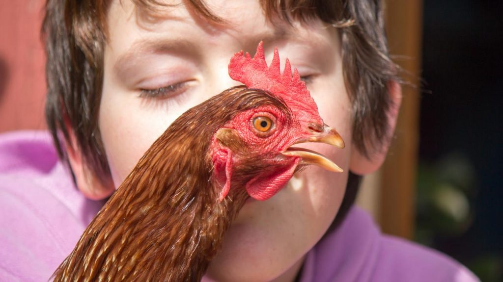 United States of America.  The health agency recommends against kissing poultry because of salmonella