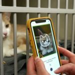 Cat Health – An app created to help owners