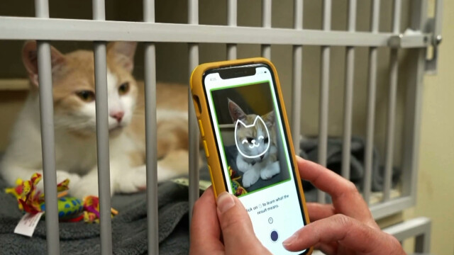 Cat Health - An app created to help owners