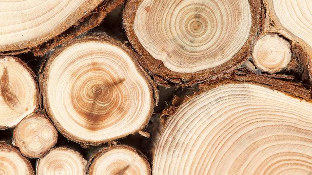 Wood prices are at an all-time high.  The Ministry responds to the call of the industry